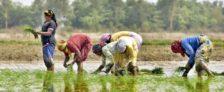 Dharani Telangana Farmers Free Passbook Land Records Registration Policy