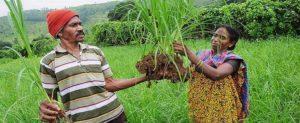 Telangana Input Assistance Scheme for Ryots – Farmers Investment Support Scheme (Rythu Bandhu)