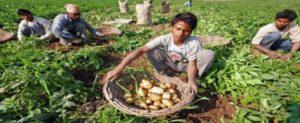 मध्यप्रदेश कृषि ऋण समाधान योजना (किसान कर्ज राहत) किसानों के लिए जल्द होगी शुरू