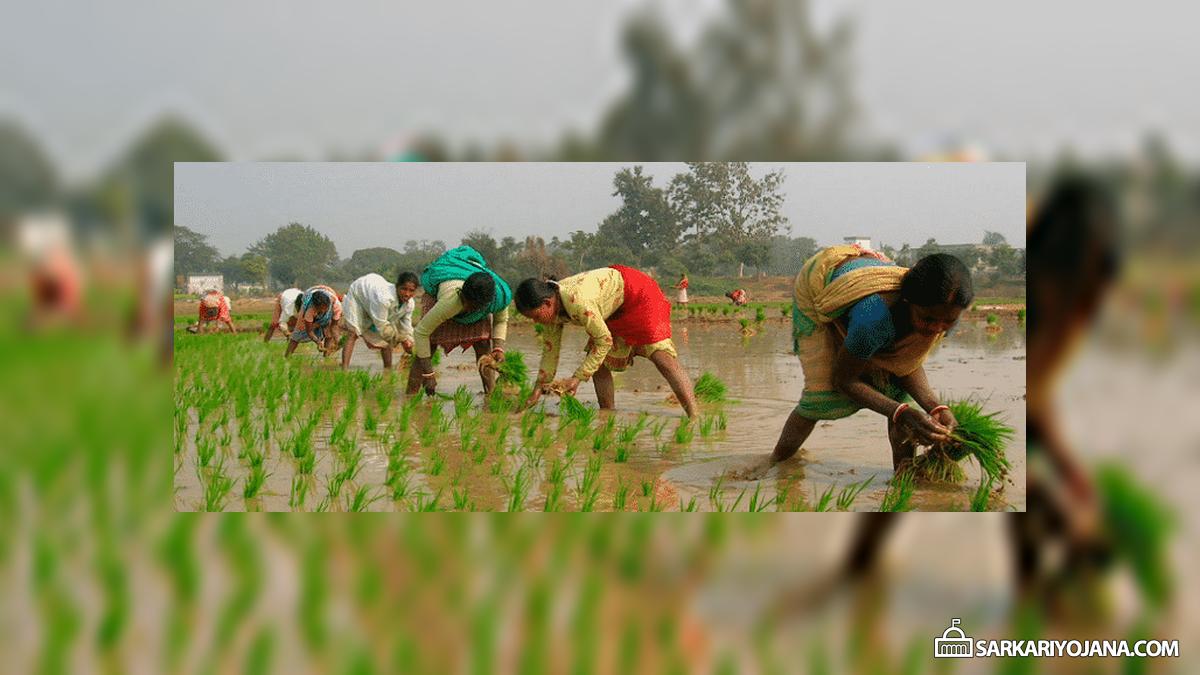 Odisha Mukhyamantri Abhinav Krishi Yantrapati Samman Yojana for Farmers