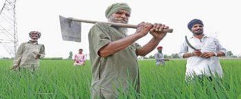 Punjab Damaged Crop Compensation Hiked