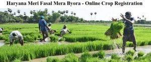Haryana Meri Fasal Mera Byora Portal Online Registration of Farmers Crop Details (e-Kharid)