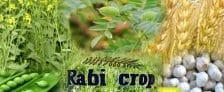 Rabi Crops 2018-19 Minimum Support Prices MSP