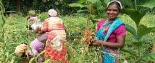 Odisha Scheme Double Income Tribal Farmers