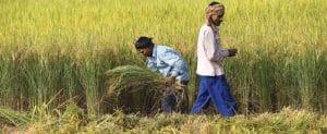 असम किसान कर्ज माफी योजना – 8 लाख किसानों का 25 प्रतिशत तक कर्ज माफ़