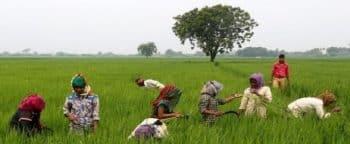 Assam Farmers Credit Subsidy Scheme AFCSS