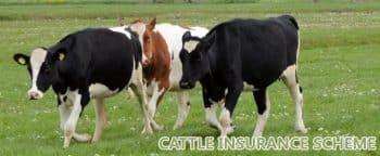 Cattle Insurance Scheme