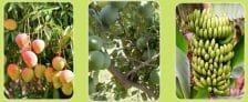 Telangana Rythu Bandhu Scheme Online