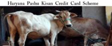Haryana Pashu Kisan Credit Card Scheme Application Form