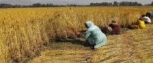 Apply Online for Paperless Crop Loan in Rajasthan – Kisan Rin Vitran Yojana Registration