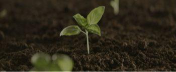 हरियाणा पौधागिरी ग्रीन अभियान मोबाइल ऐप – पौधे लगायें पैसे कमाएं | विद्यार्थी ऑनलाइन रजिस्ट्रेशन, आवेदन