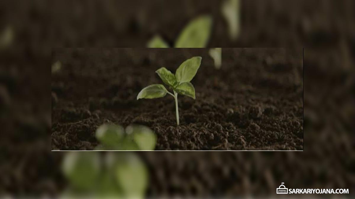 Haryana Paudhagiri Green Abhiyan Download App
