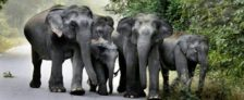 Odisha Gaja Bandhu Scheme – Gajabandhu Volunteers to Check Elephant Deaths