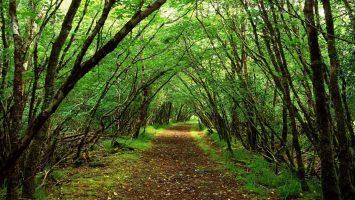 Nagar Van Yojana City Forest Scheme