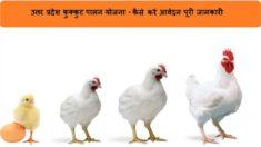 उत्तर प्रदेश कुक्कुट पालन कर्ज योजना 2021 आवेदन प्रक्रिया – मुर्गी पालन लोन के लिए पंजीकरण / पात्रता