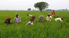 [Apply] Odisha Balaram Yojana Online Registration Form 2020-2021 – Agricultural Credit to Landless Farmers