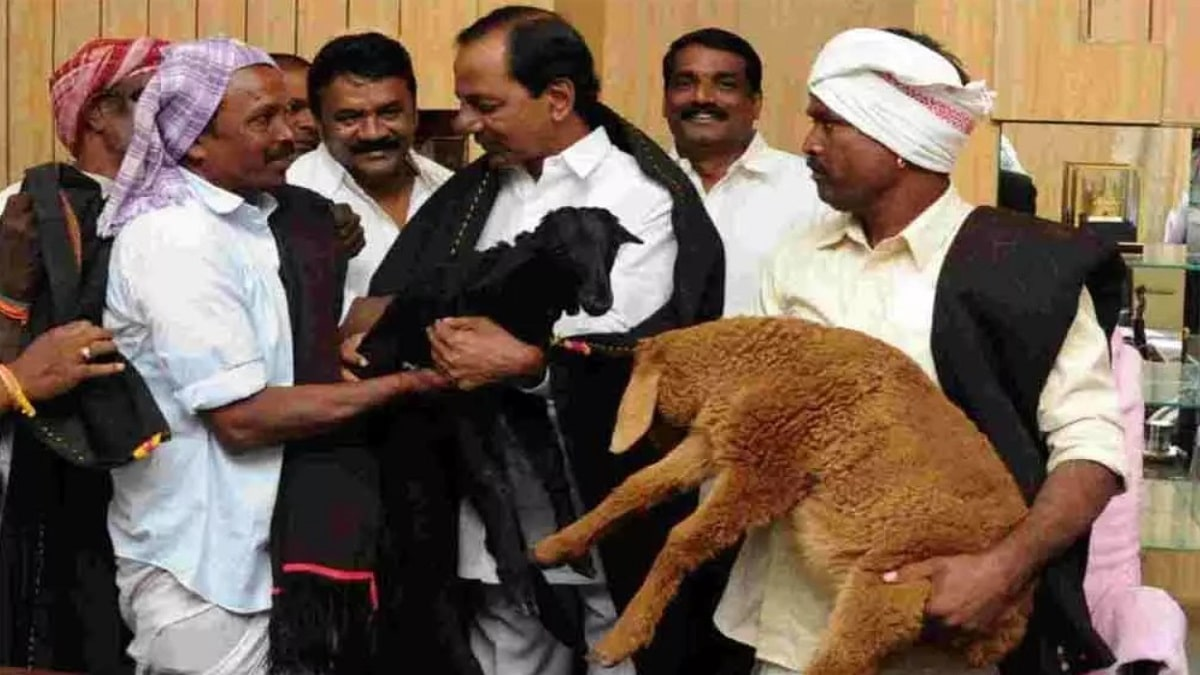 Telangana Sheep Distribution Scheme